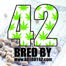 Bred by 42